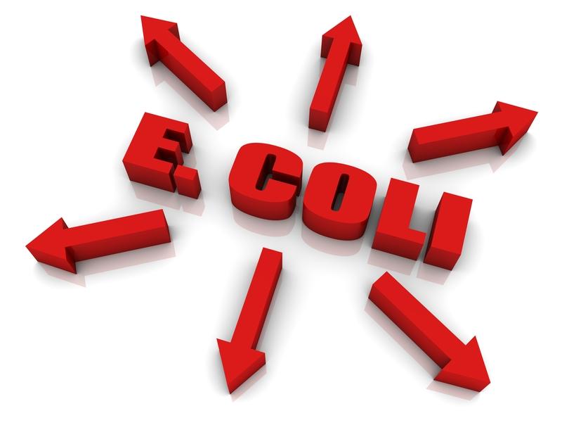 Uwaga! W sałacie rzymskiej odkryto bakterię E. coli