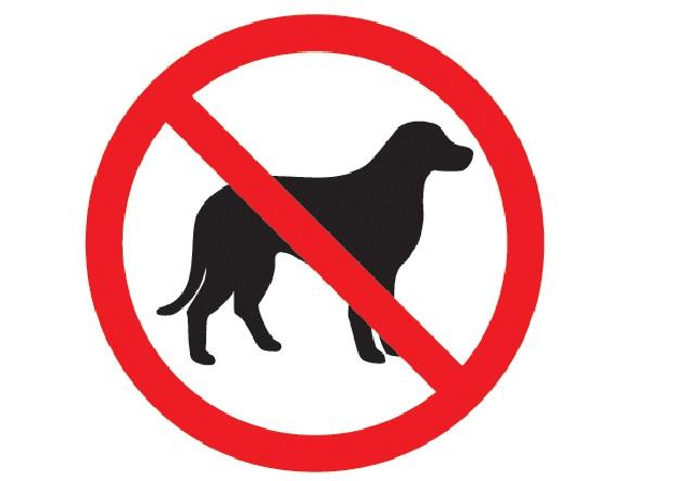 Przez budżetowe cięcia zginą dziesiątki psów i kotów?