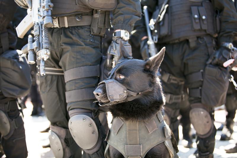 Psy policyjne z Miami otrzymały kamizelki kuloodporne