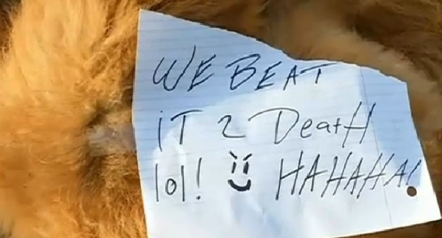"""Bestialskie zabójstwo psa na Florydzie. """"Zatłukliśmy go, hahaha!"""""""