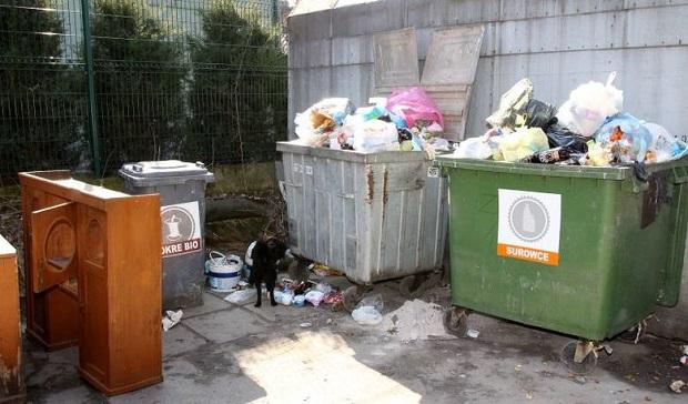Trucizna w śmietnikach na Chojnach w Łodzi