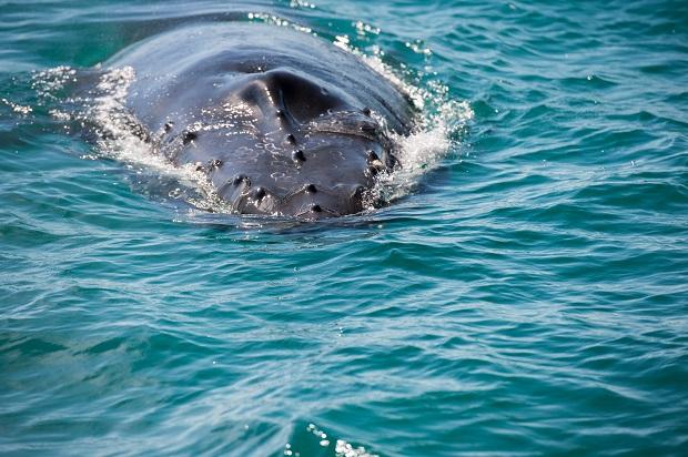 Flądra, wieloryb? Zachwycony mieszkaniec Bostonu podbił internet