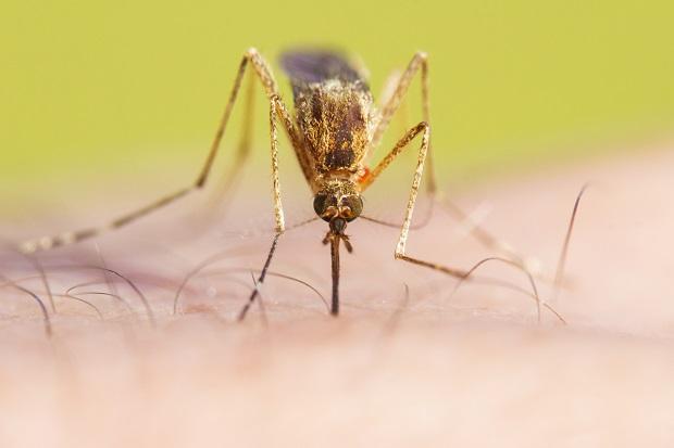 U komarów w stanie Waszyngton znaleziono wirusa Zachodniego Nilu