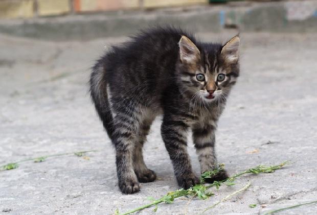 Kolejny, trzynasty już kot zabity w stanie Waszyngton. Policja prowadzi śledztwo