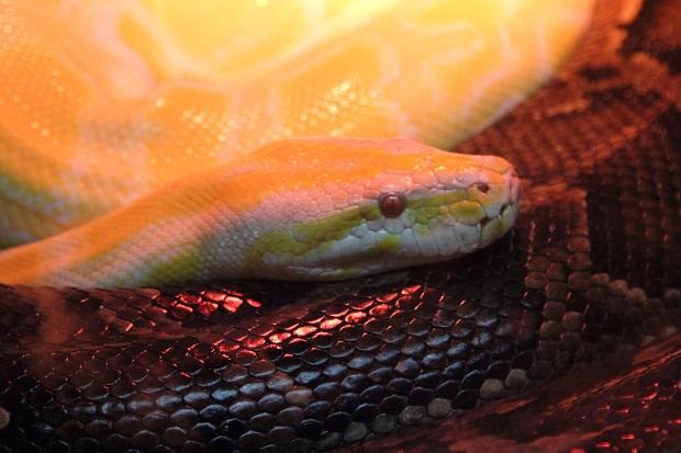 Wąż ukrył się na pchlim targu na Florydzie