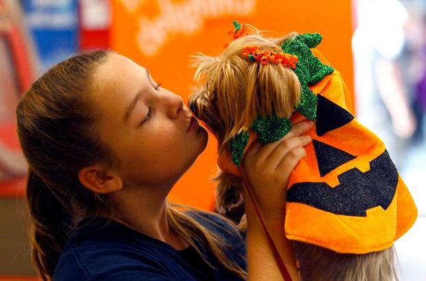Psie Halloween (galeria zdjęć)