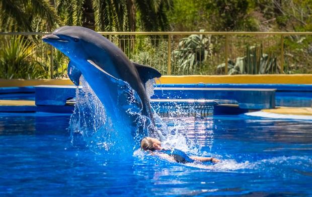 SeaWorld z pozwoleniem na rozbudowę, ale zakazem reprodukcji zwierząt