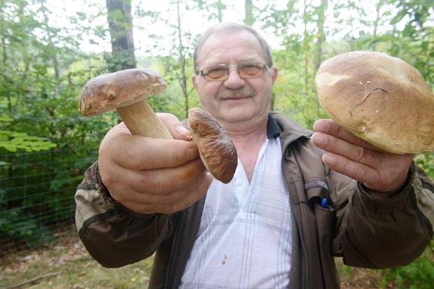 Prawdziwki już rosną. Leśnicy z Nadleśnictwa Pińczów zapowiadają wysyp grzybów