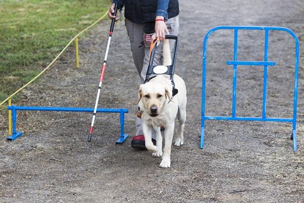 W Seattle powstanie park dla niewidomych i głuchoniemych