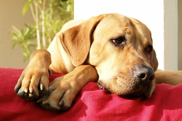 Psy uratowane z Korei Południowej do adopcji w Everett