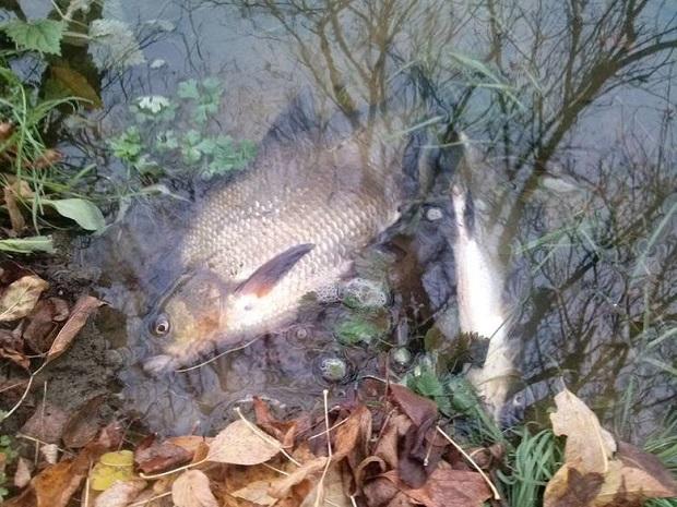 Setki dogorywających ryb w Warcie – katastrofa ekologiczna?