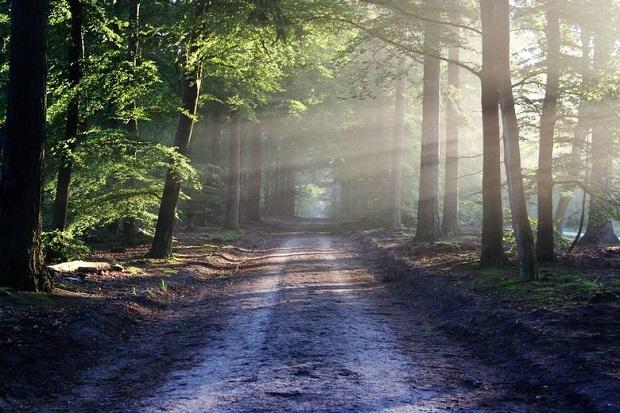 Lasy Państwowe: Kornik drukarz atakuje lasy prywatne położone w pobliżu Puszczy Białowieskiej