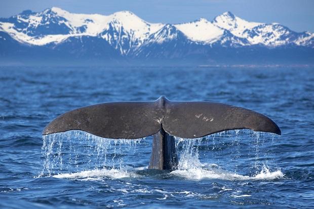 Martwy wieloryb na plaży w stanie Waszyngton
