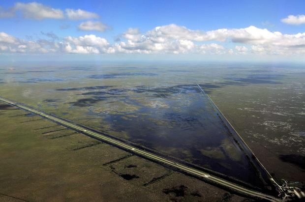 Płot przy drodze na Florydzie uchroni dzikie zwierzęta