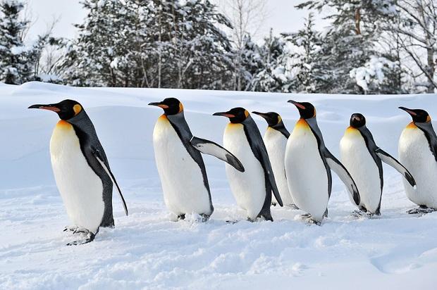 FedEx przywiózł 20 pingwinów do zoo w Detroit