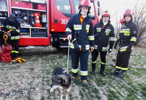 W Koninie pies spadł z 15 m skarpy. Akcja ratownicza jak w górach!