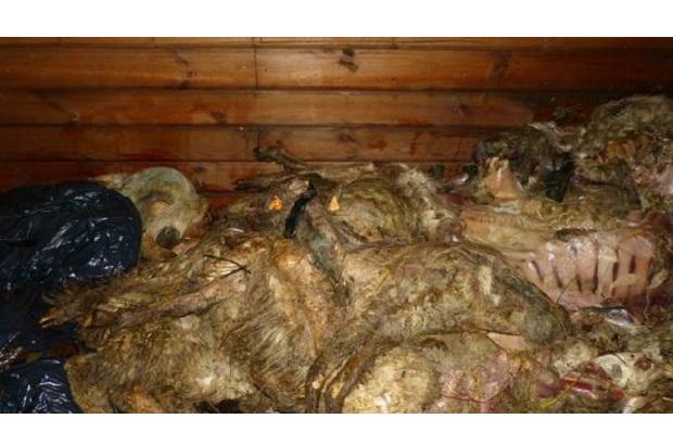 Masakra w Szczyrku – 31 padniętych owiec