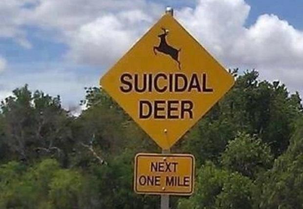 """Nowe znaki przy drogach w Illinois informujące o """" jeleniach samobójcach"""""""