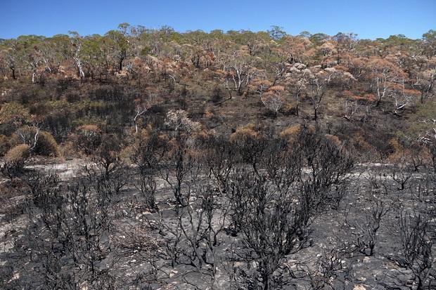 Pożary buszu w południowej Australii