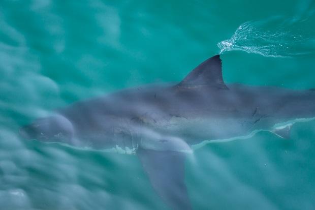 Czwarty zamarznięty rekin znaleziony u wybrzeży Massachusetts