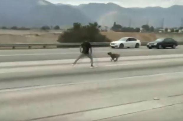 Zagubione psy pędziły autostradą. Pomogli im kierowcy (wideo)