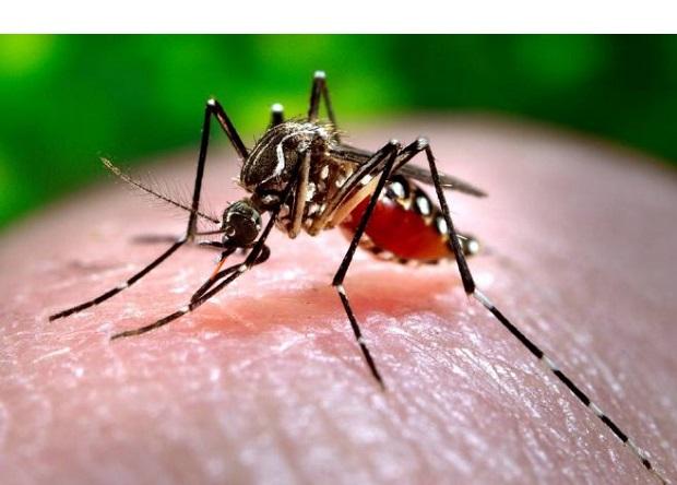 Wirus Zachodniego Nilu już na przedmieściach Chicago