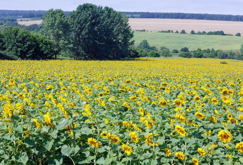 PO złożyła projekt ustawy dot. obrotu ziemią rolną
