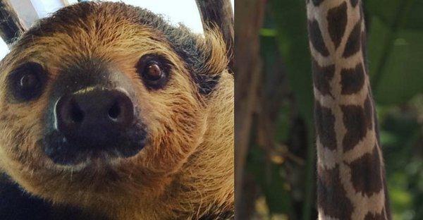 Zwierzęta w zoo w Los Angeles robią sobie selfie