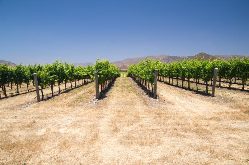 Susza w Kalifornii trwa, ale mieszkańcy otrzymają więcej wody do wykorzystania