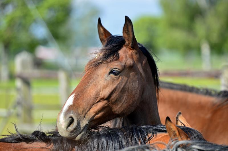 Koń, który malował obrazy, nie żyje