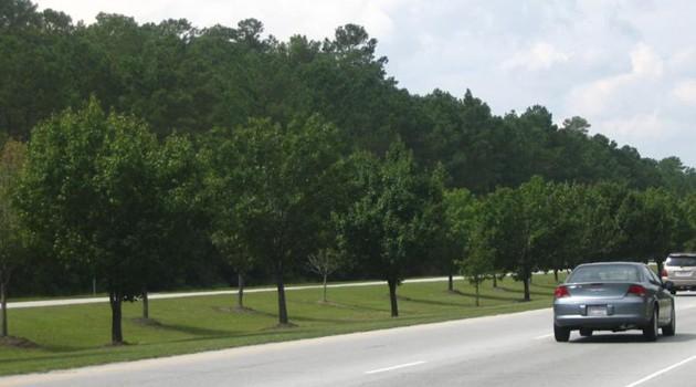 58 tysięcy drzew zostanie posadzonych przy autostradach w Illinois