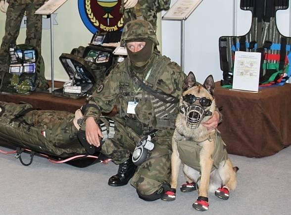 Psy – żołnierze na straży tarczy w Redzikowie