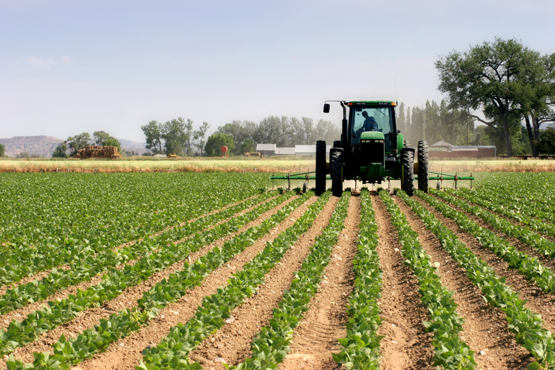 Wiceminister rolnictwa: susza występuje wśród wszystkich upraw