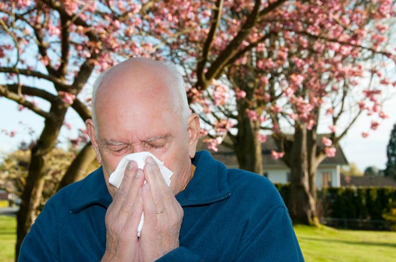 Sezon alergii daje się we znaki mieszkańcom Wietrznego Miasta