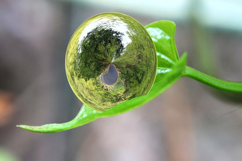Botanicy z Królewskich Ogrodów Botanicznych Kew w Londynie dokonali globalnej analizy flory