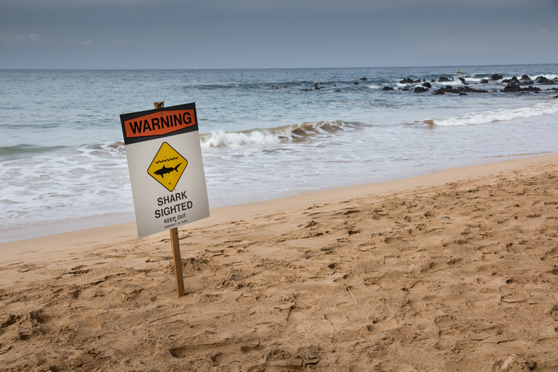 Zjedzony do połowy rekin na plaży na Florydzie