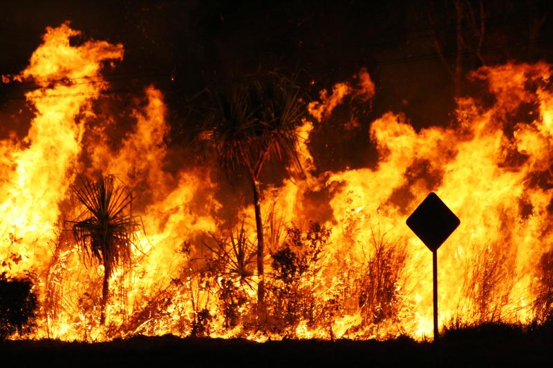 Już 86 ofiar pożaru lasów w Kalifornii