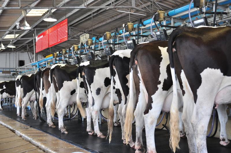 Polscy producenci mleka czekają na pomoc Komisji Europejskiej
