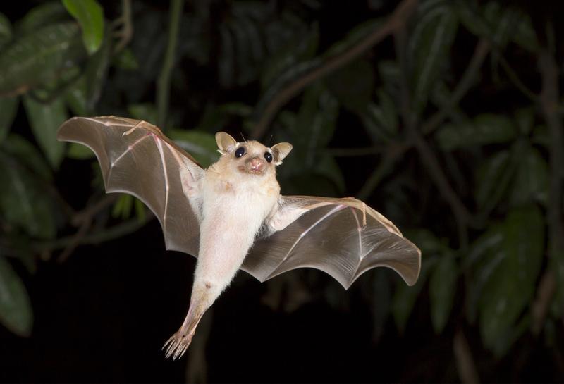 Ostrzeżenie przed atakami wściekłych nietoperzy