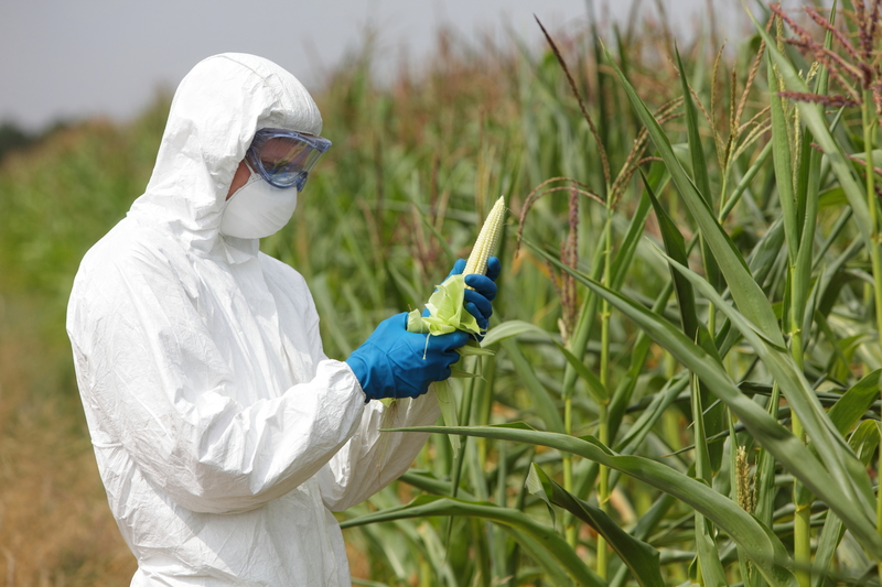Sejmowe komisje debatowały nad nowelą ustawy o GMO