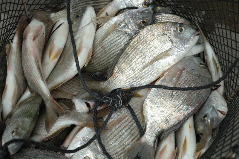 Ponad 26 mln ryb wpuszczono w 2017 r. do wód w Michigan