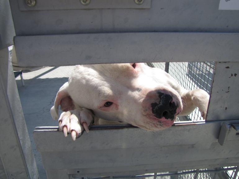 Zarzuty dla właściciela psów w związku z pogryzieniem biegaczki