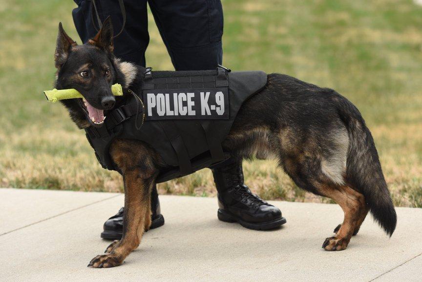 Policjant zastrzelił psa policyjnego na Florydzie