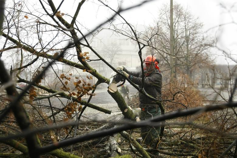 Wycinka drzew w Świnoujściu przekroczyła wszelkie granice. Miasto próbuje oszacować straty