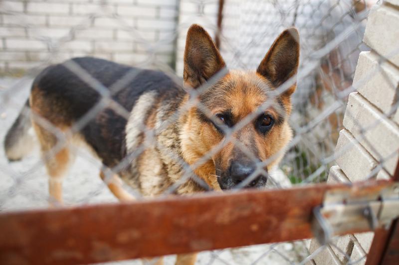 Kalifornia pierwszym stanem w USA, gdzie będzie nakaz sprzedaży zwierząt ze schronisk