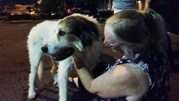 Pies, który z Florydy trafił pod Boston, wrócił do właścicielki