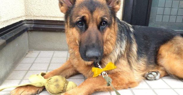 Yellow Dog Project – Nie podchodź do psa, który ma żółtą wstążkę!