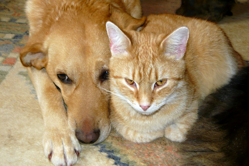 Rekordowa adopcja psów i kotów w Michigan