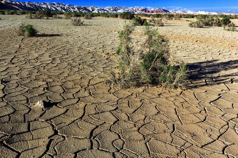 Para, która żyła z dziećmi na pustyni bez wody i prądu, zapewnia, że dzieci nie głodowały