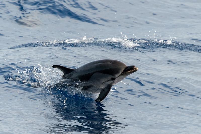 Sezon oglądania delfinów w Cieśninie Gibraltarskiej